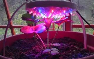 Эффективное освещение для комнатных растений.