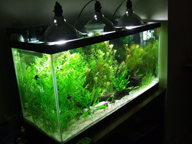 0-светильники для аквариума.