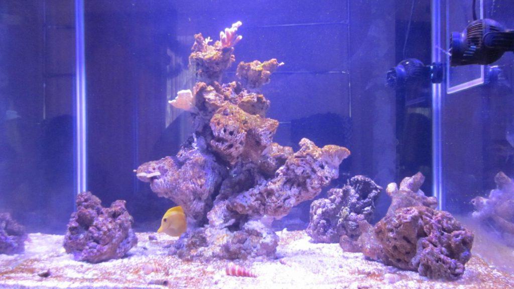 extra reef